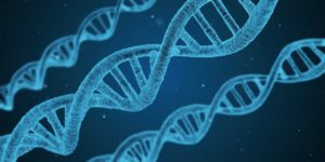 Dna String Biology D  - qimono / Pixabay