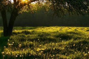 Meadow Grass Tree Landscape Summer  - giselaatje / Pixabay